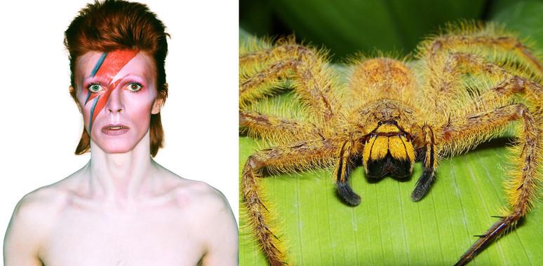 Amors, venjances i missatges ocults en els noms de les espècies