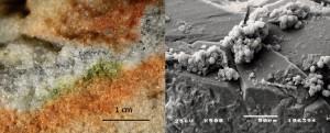 Secció d'una roca colonitzada per microorganismes criptoendolítics i detall al microscopi electrònic d'un fong Cryomyces en cristalls de quars. / S. Onofri et al.