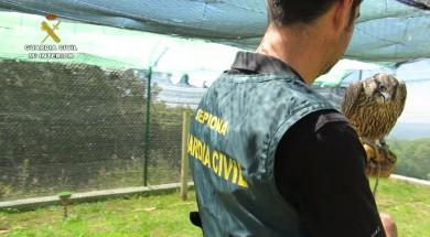 La Guardia Civil desarticula una xarxa criminal dedicada al tràfico ilegal de falcons