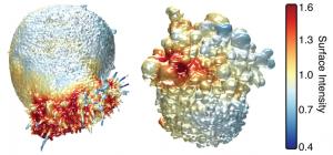Un-microscopio-3D-desvela-detalles-de-las-celulas-cancerosas_image_380