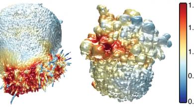 La imatge mostra les superfícies extretes de dues cèl·lules canceroses. A l'esquerra, una cèl·lula de càncer de pulmó acolorida per la intensitat de l'actina i a la dreta, una cèl·lula de melanoma acolorida per l'activitat de PI3-quinasa prop de la superfície de la cèl·lula. / Welf and Driscoll et al