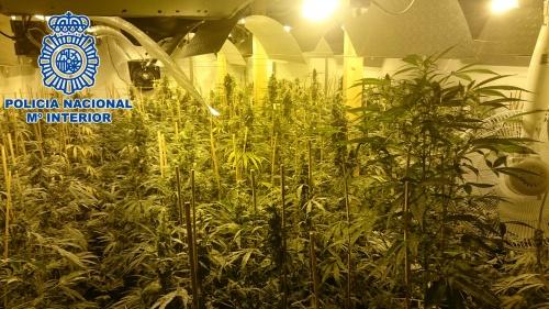 La Policia Nacional desmantella tres plantacions interiors de marihuana en habitatges llogats a la comarca alacantina de Marina Baixa