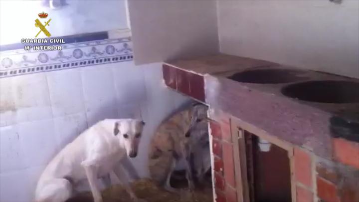 La Guàrdia Civil deté a dos homes com a presumptes autors d'un delicte de maltractament animal a la Vila Joiosa (Alacant)