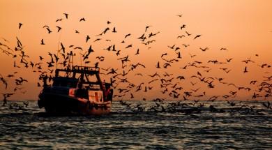 Als vaixells sospitosos d'estar involucrats en la pesca il·legal se'ls pot denegar l'entrada als ports o impedir descarregar el peix, repostar o reabastir-se. / Hernán Piñera