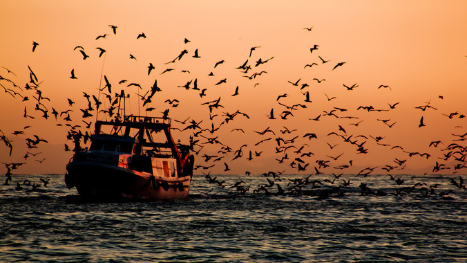 El primer tractat mundial contra la pesca il·legal entra en vigor