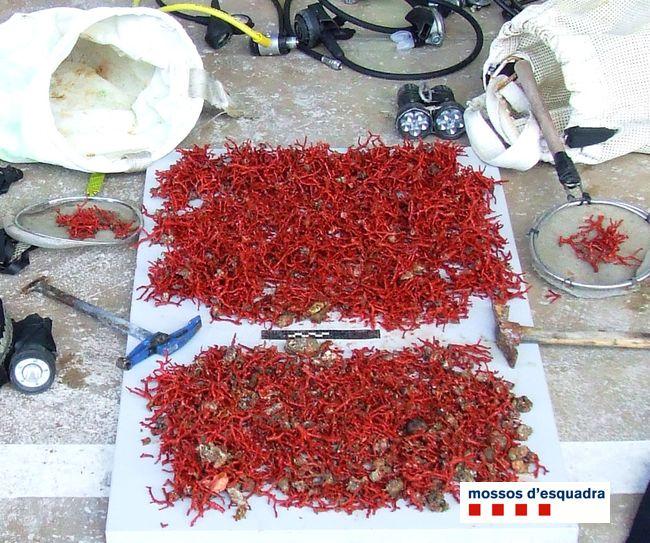 Detingut un coraller per envestir l'embarcació d'Inspecció quan els Mossos i els inspectors de pesca el volien inspeccionar