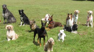 Les races de gossos són molt diverses entre elles. / Dayna Dreger