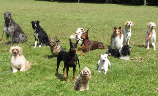 Creen el mapa més complet de l'evolució de les races de gossos