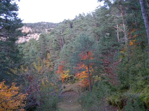 La falta de gestió forestal accelera la substitució de pins per alzines