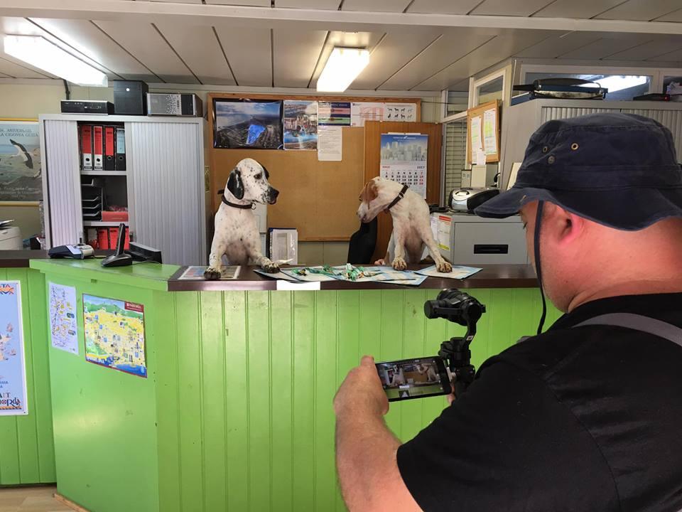 El càmping Castell Mar organitza el primer flashmob al món protagonitzat per gossos