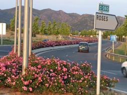 roses vila florida