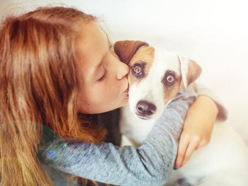 Els gossos usen expressions facials per comunicar-se amb els humans