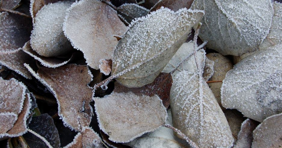 Fred intens i neu a cotes baixes
