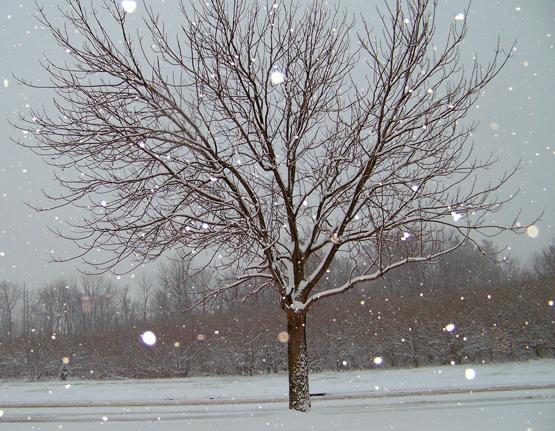 Última hora sobre el temporal de Neu i Fred que afectarà també l'Alt Empordà en les properes hores