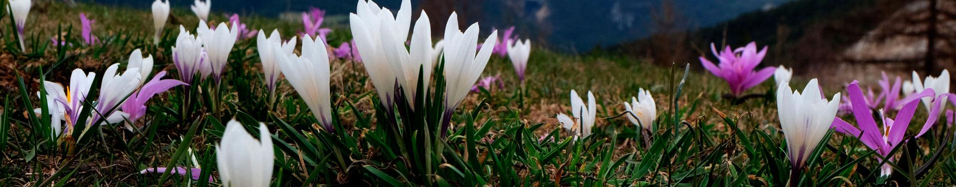 Propostes pel primer Cap de setmana de la Primavera