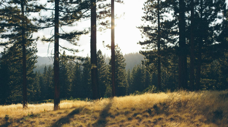 Comença la prohibició de fer foc al bosc