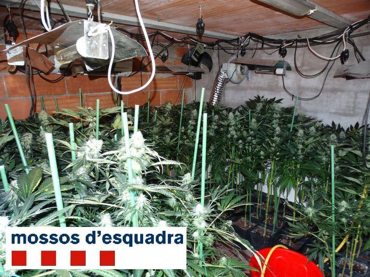 Un dispositiu policial a Figueres destapa una plantació de marihuana i vuit habitatges amb defraudació de fluid elèctric