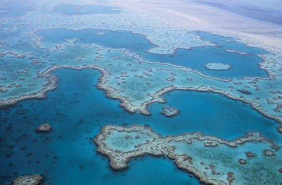 La Gran Barrera de Coral ha sobreviscut a cinc canvis ambientals dràstics