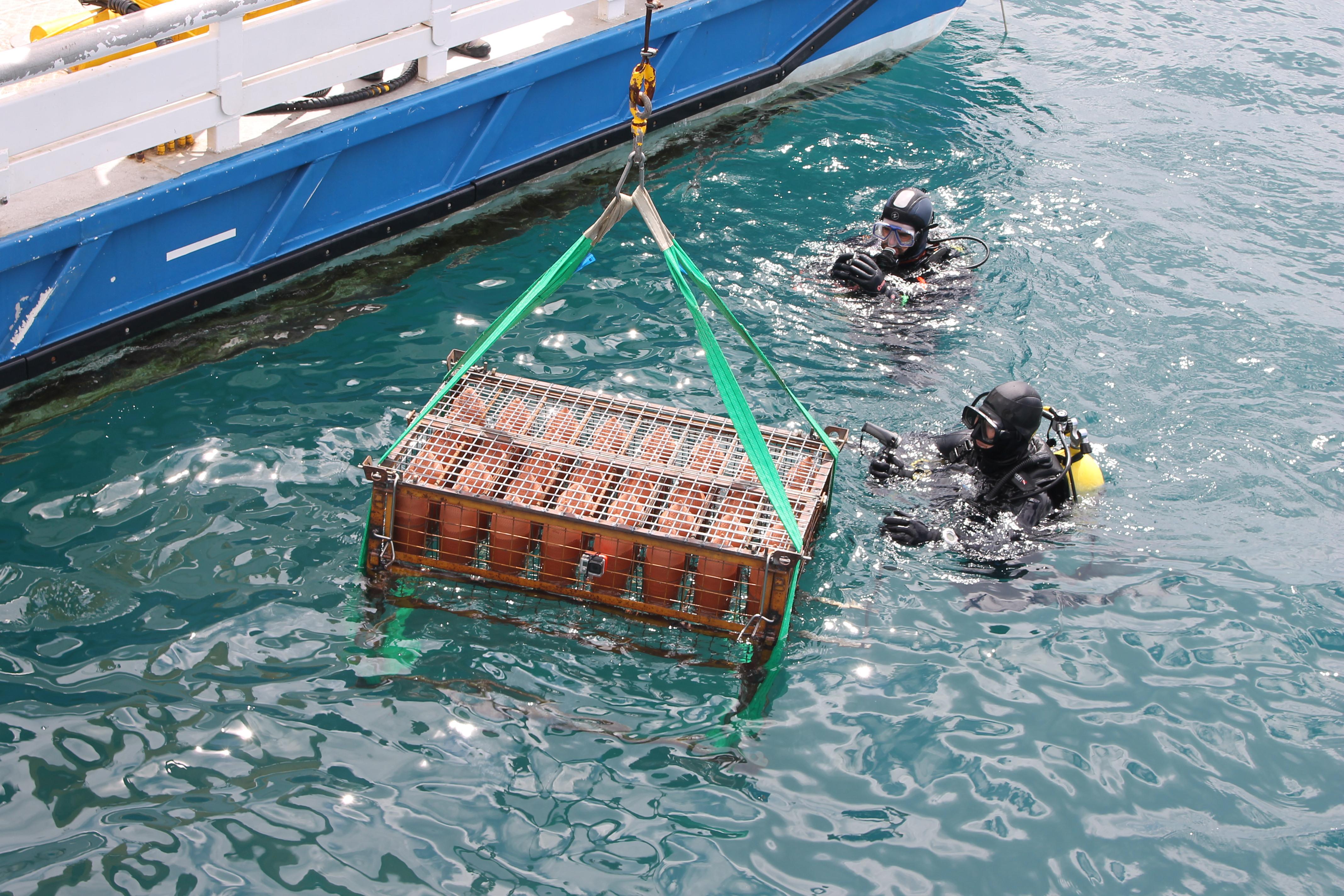 L'Hotel Cala Jóncols de Roses impulsa amb l'ICSuro un estudi pioner sobre l'evolució del vi submarí