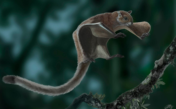 Descobert a Catalunya el fòssil més antic d'un esquirol volador