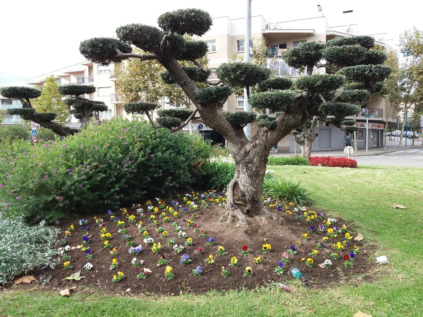Rotondes i espais verds de Roses renoven la seva vegetació amb flors de temporada