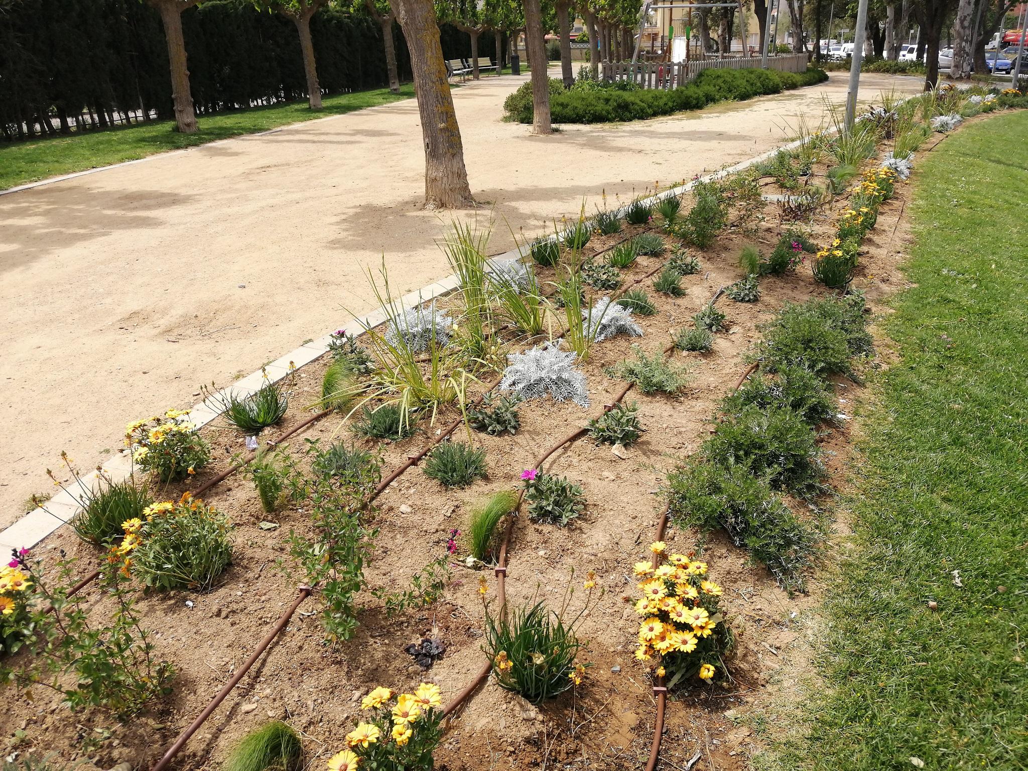 Roses renova la plantació i cromatisme de diferents espais verds del municipi