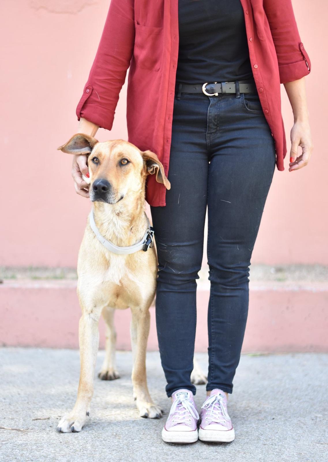 Gos en Adopció