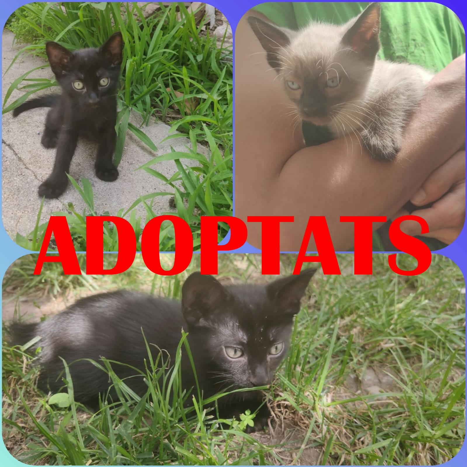 Gatets en adopció a Cabanes