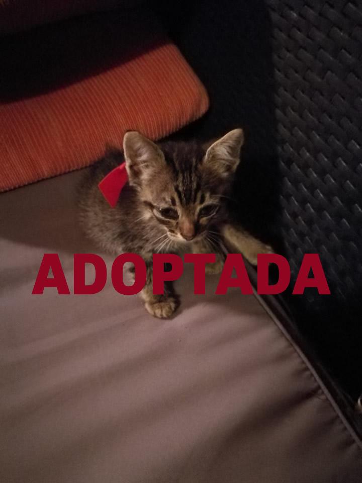 Gateta en adopció