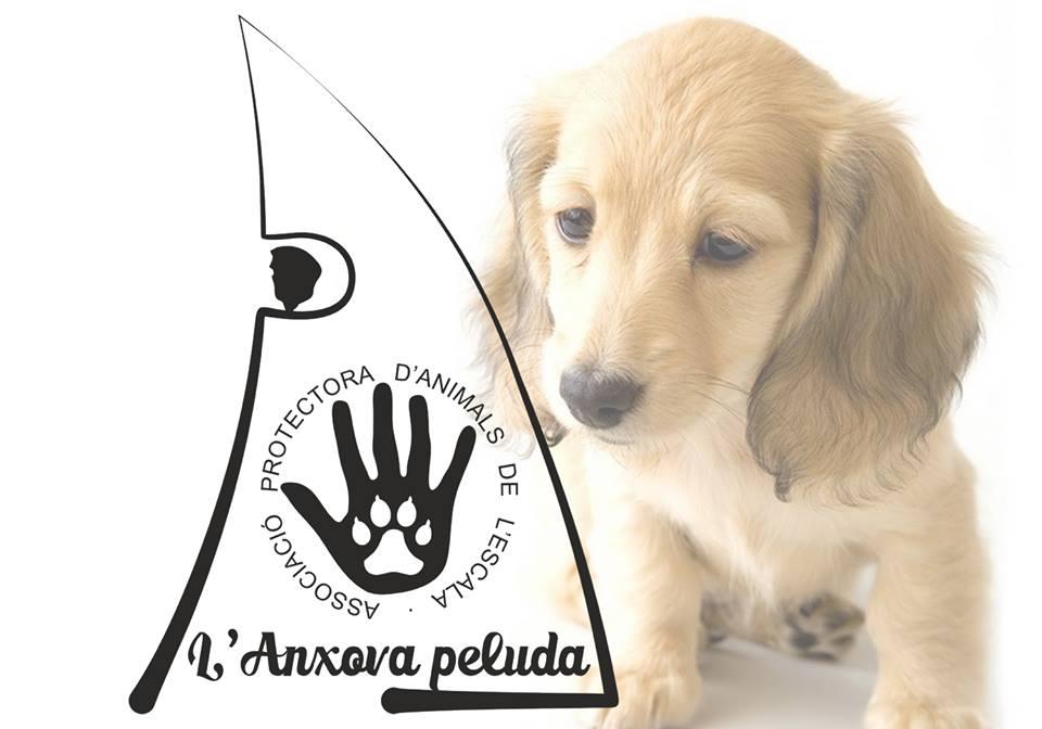 L'Anxova peluda denuncia la intenció de l'Ajuntament de l'Escala per reprendre el conveni amb el consell comarcal per a la per a la recollida d'animals del carrer