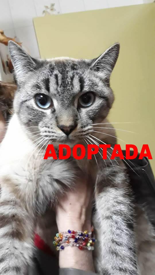 Gat en adopció