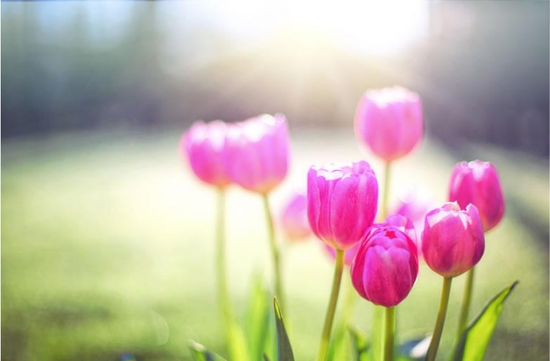 Demà entra la primavera!