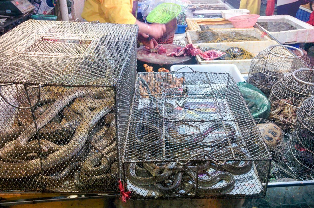El tràfic il.legal d'animals salvatges, una bomba sanitària que ha esclatat amb el coronavirus
