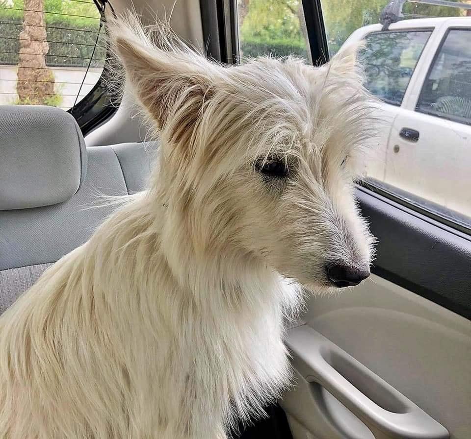 Gos perdut a Santa Margarida