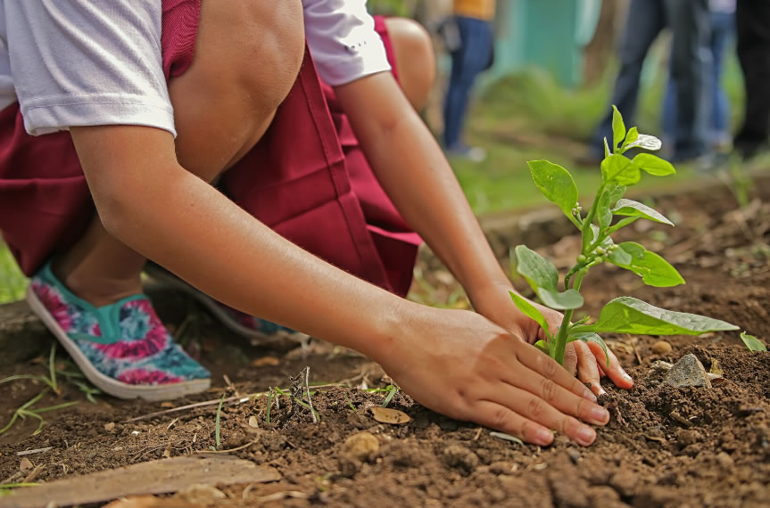 Avui se celebra el Dia Mundial del Medi Ambient