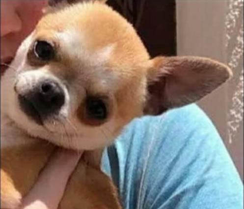 Es busca els autors de la mort d'aquest gosset