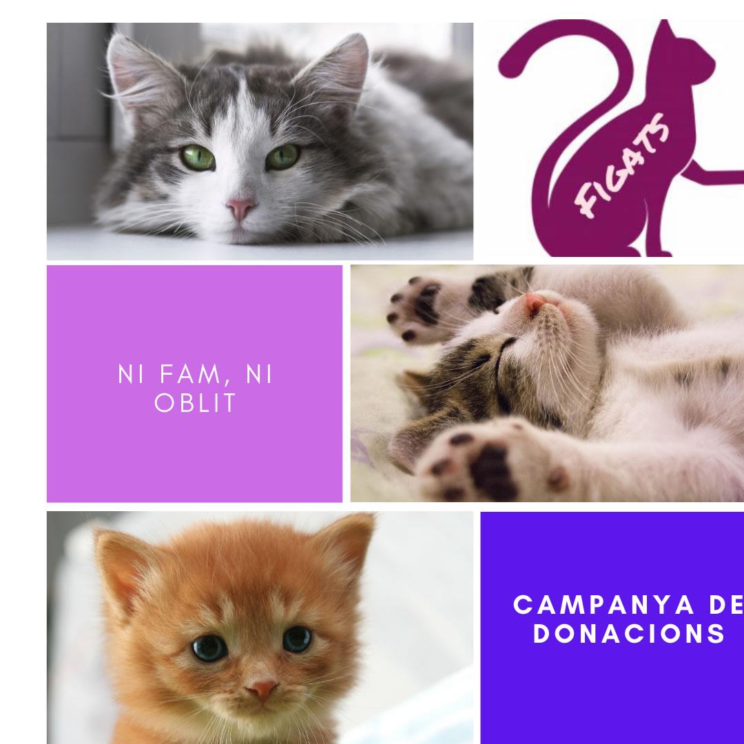 Campanya de recollida d'aliments a Roses i Figueres pels gats abandonats al carrer