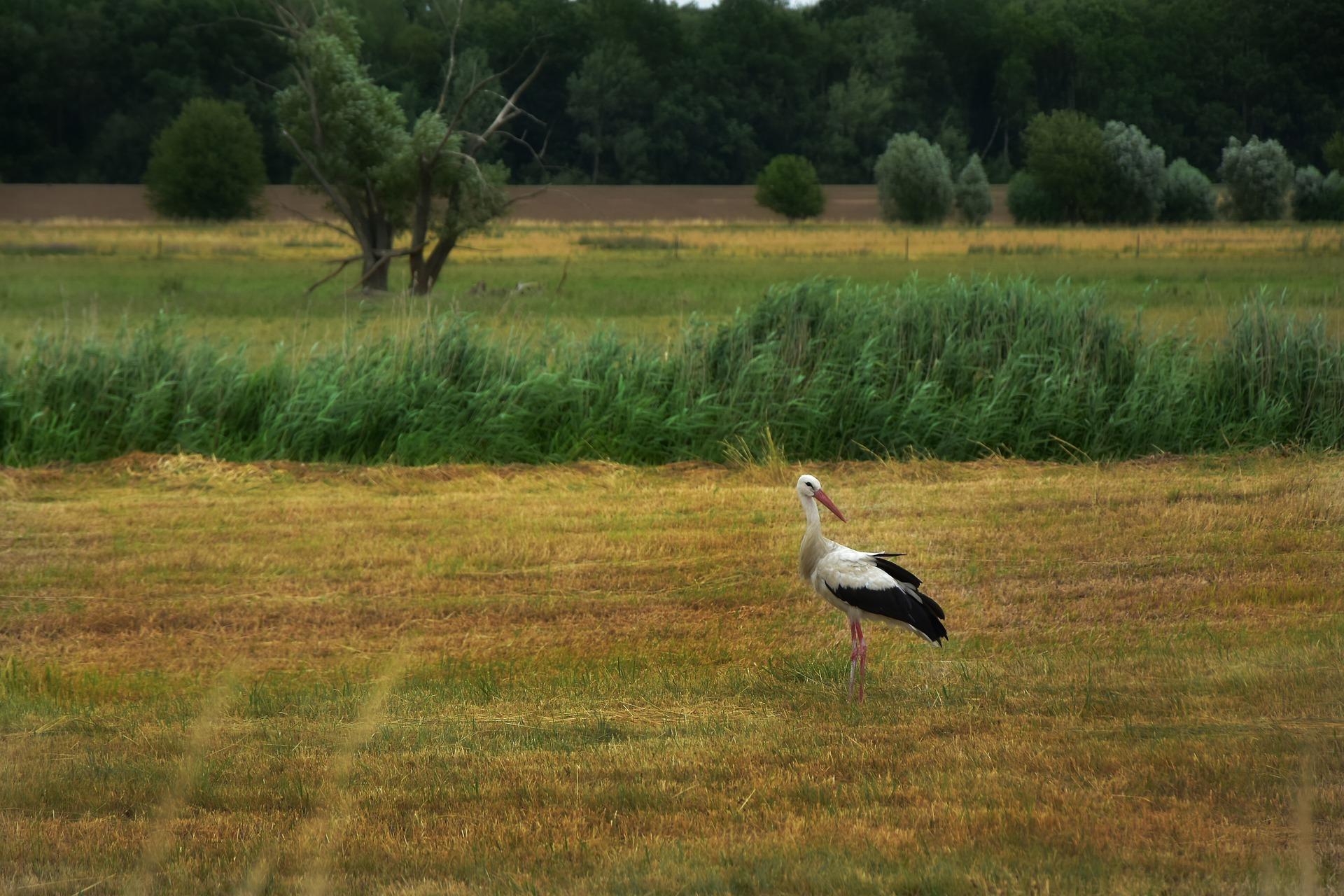 Agricultura confirma la presència d'Influença aviària en aus dels Aiguamolls de l'Empordà