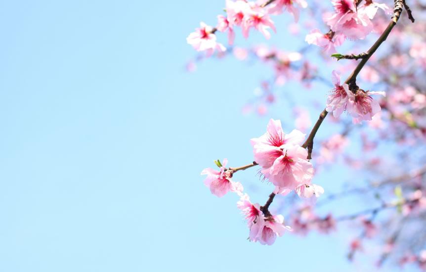 Demà dissabte entra la primavera