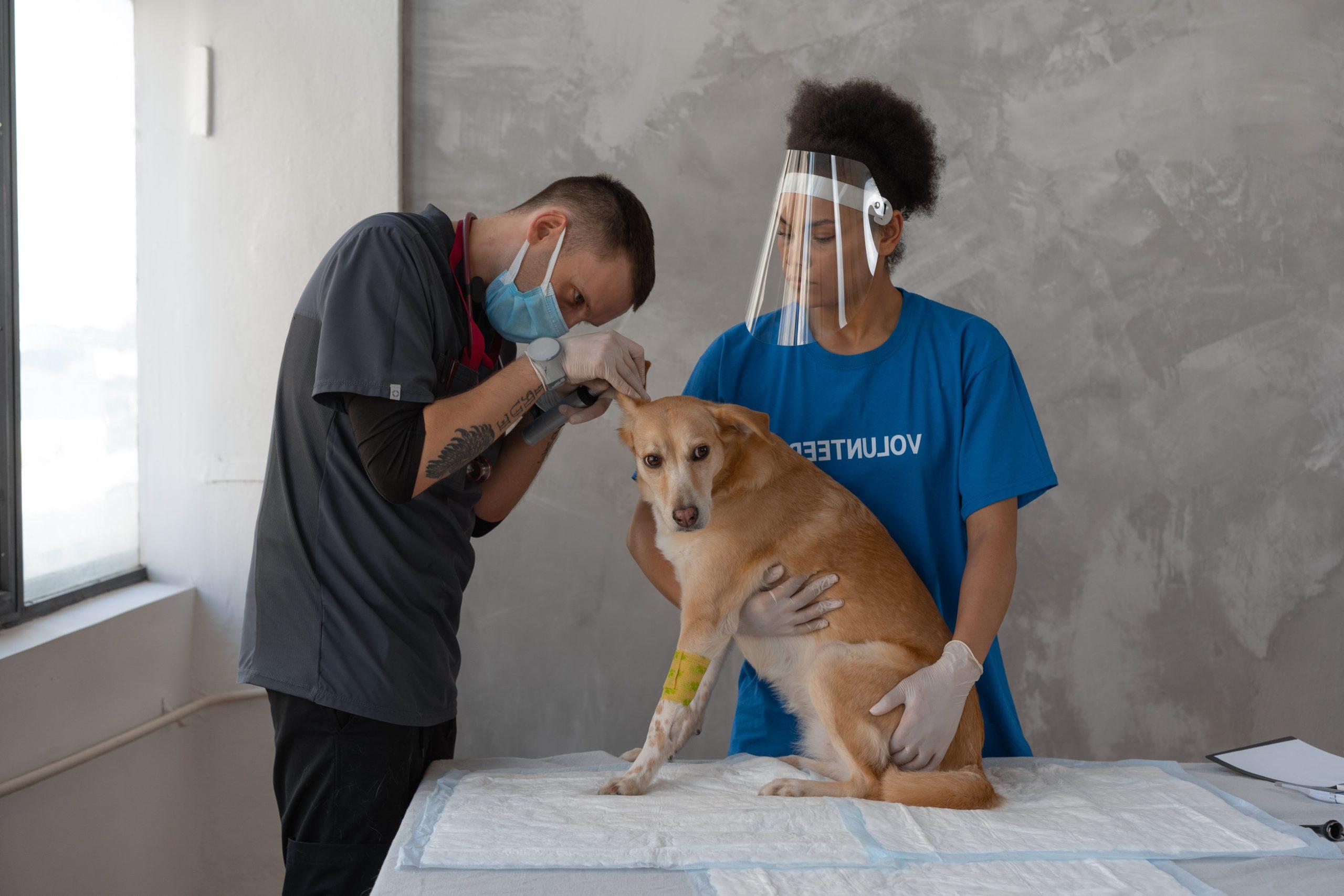 Una iniciativa veïnal proposa la construcció d'un refugi per animals a Roses